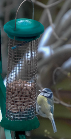 Blue Tit On Feeder@