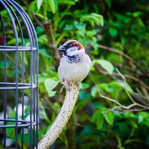 Spring birds feeding