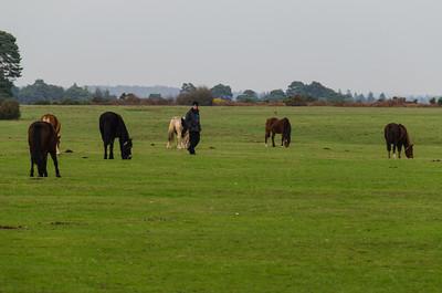 A Stroll In A Field of Free Range Horses.