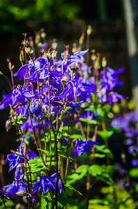 Spring flowers at Priory
